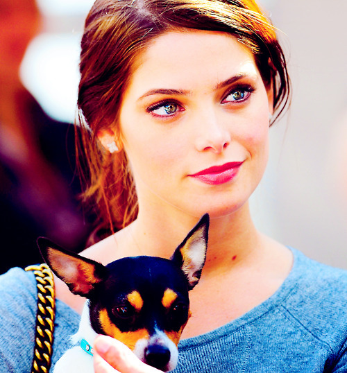 tumblr_static_ashley-greene-breaking-dawn-chihuahua-cute-dog-favim.com-256283