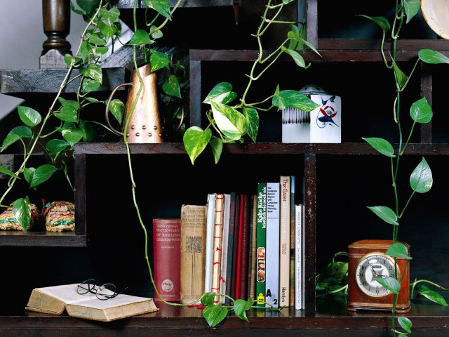 planta-estante-de-livros-wallpaper-20279